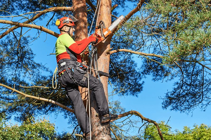 Tulsa Tree Removal Services