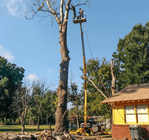 Tree removal Tweed Heads