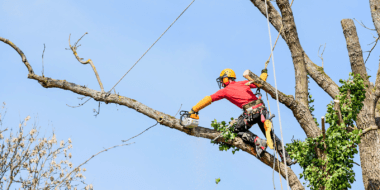 Tulsa Tree Services 16