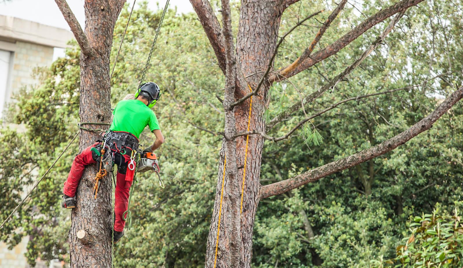 Tulsa Tree Services 4